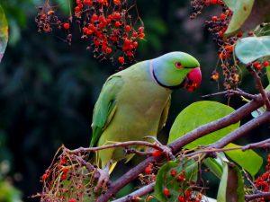 Birds Names in Telugu